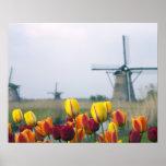 Windmolens en tulpen langs het kanaal binnen plaat