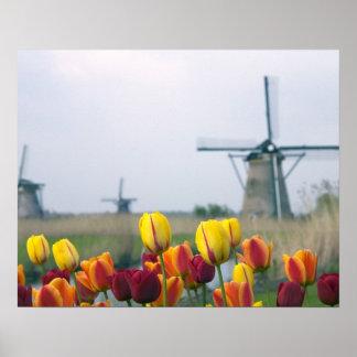 Windmolens en tulpen langs het kanaal binnen poster