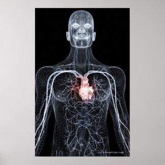 Wireframe van het bloedvat in hoger lichaam 2 poster
