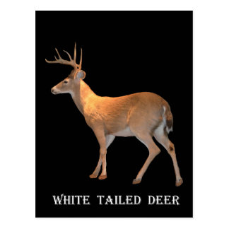 Wit-De steel verwijderde van herten (Bok) Briefkaart