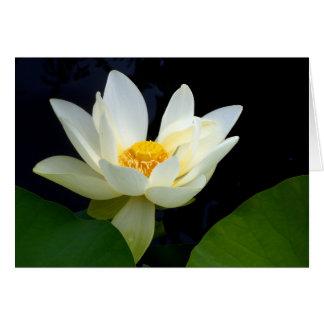 Wit Lotus Briefkaarten 0