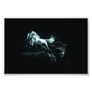 Wit Paard en de Aanval van Wilde Wolven Foto Afdruk