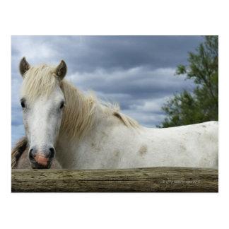 Wit Paard | Frankrijk Briefkaart