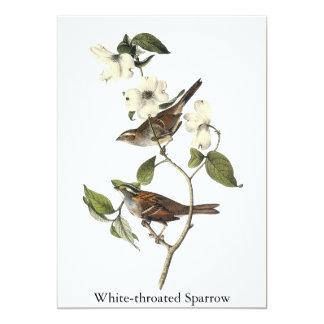 Wit-Throated Mus - John Audubon Kaart