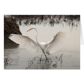 Witte Aigrette, Uitgespreide Vleugels, Nevelig Kaart