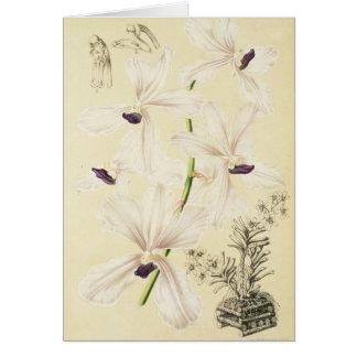 Witte & Blauwe Orchideeën Briefkaarten 0