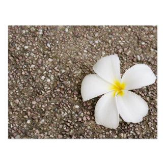 Witte bloem Frangipani op rotsoppervlakte Briefkaart