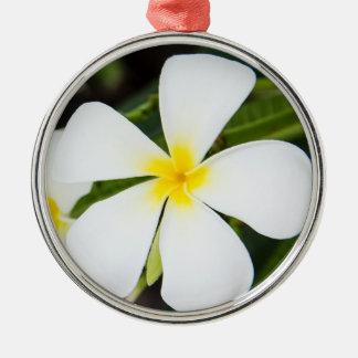 Witte Bloem Plumeria - BloemenSjabloon Frangipani Zilverkleurig Rond Ornament