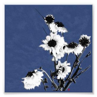 witte bloemen op blauw foto afdruk