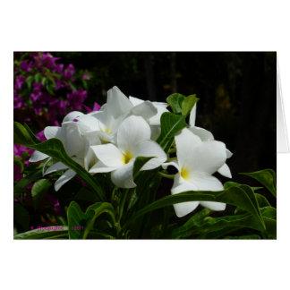 Witte Bloemen van de Sleutels van Florida Wenskaart