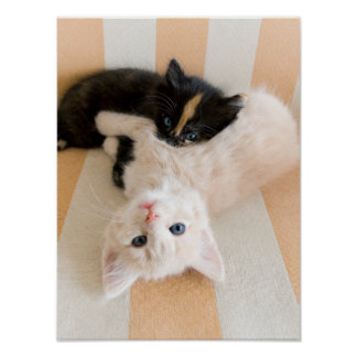 Witte en Zwarte Katjes Poster