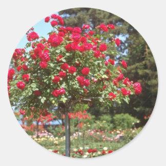 Witte Openbare Tuinen, de bloemen van Genève, Ronde Sticker