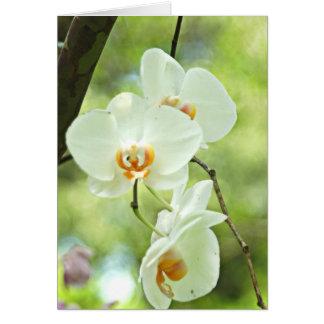 Witte Orchidee Briefkaarten 0