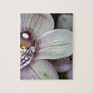 Witte Orchidee Foto Puzzels