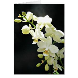 Witte orchidee op de zwarte Kaart van de