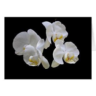 Witte Orchidee op Zwarte Kaart