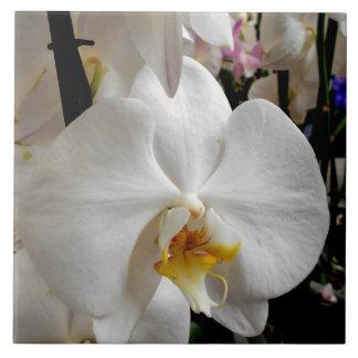 Witte Orchidee Tegeltje Vierkant Large