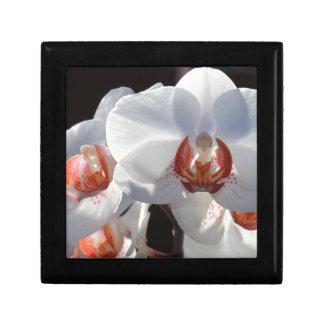 Witte Orchidee Vierkant Opbergdoosje Small