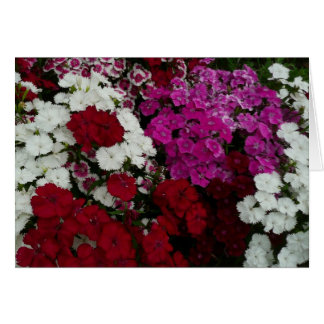 Witte, Roze en Rode BloemenFotografie Dianthus Briefkaarten 0