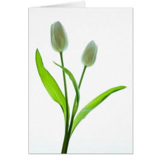 Witte Tulpen Kaart