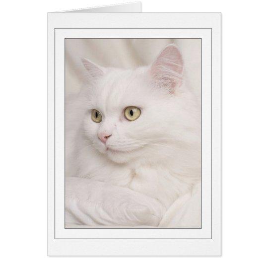 Witte turkse angora kater briefkaarten 0