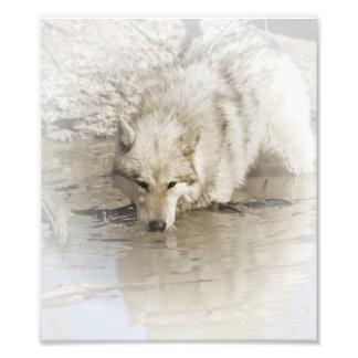 Wolf die in Kunstwerk van de Foto van het Meer het
