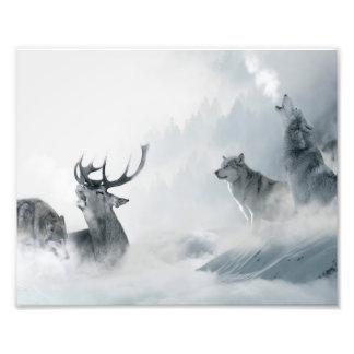 Wolf en Herten Foto Afdrukken