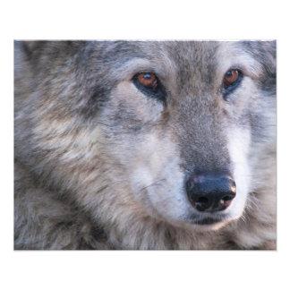 Wolf Foto Kunst