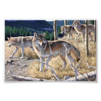 Wolf in de winterbos foto afdruk