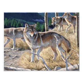 Wolf in de winterbos foto afdrukken