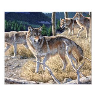 Wolf in de winterbos fotografische afdruk