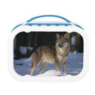 Wolf Lunchbox