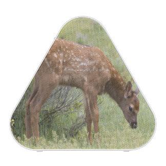 WY, Yellowstone Nationaal Park, het kalf van Bluetooth Luidspreker
