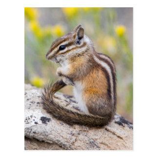 Wyoming, Sublette Provincie, Minste Aardeekhoorn Briefkaart
