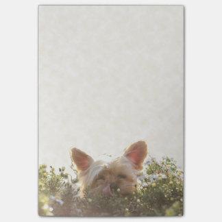 Yorkshire Terrier die in Zon leggen die lippen Post-it® Notes