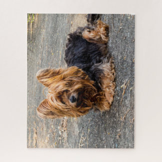 Yorkshire Terrier Legpuzzel