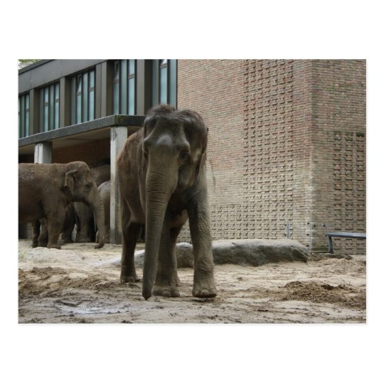 Young curious elephant briefkaart