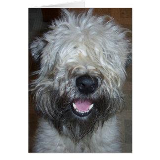 Zacht Met een laag bedekt Wheaten Terrier Briefkaarten 0