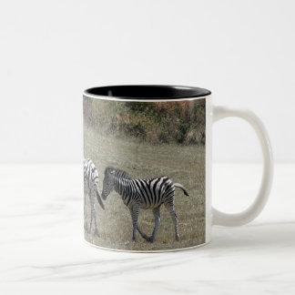 Zebras overvalt in beweging tweekleurige koffiemok