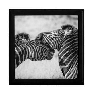 Zebras van de savanne decoratiedoosje