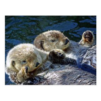 Zee-otters Briefkaart