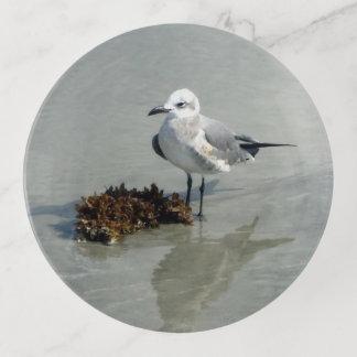Zeemeeuw met Zeewier op Strand Sierschaaltjes