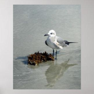 Zeemeeuw op Strand met Zeewier Poster
