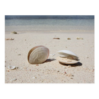 Zeeschelpen op zandig Caraïbisch strandclose-up Briefkaart