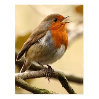 Zingende Robin Briefkaart