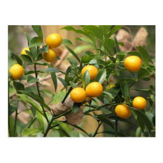 Zoete Kumquats Briefkaart