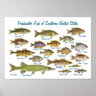 Zoetwater Vissen van Zuidelijke Verenigde Staten Poster
