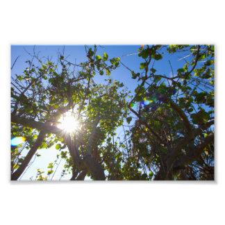Zon die door mangrovebomen glanzen, Florida Foto Afdruk