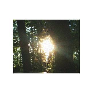 Zonlicht door de Bomen Canvas Afdruk