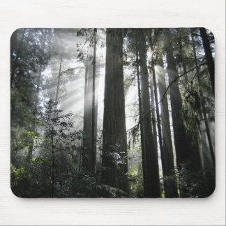 Zonlicht door de Californische sequoia's Muismatten